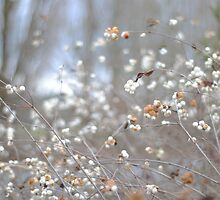 White Berries during the Winter by kitkat55555