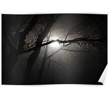 Surreal Tree in Fog - Landscape Poster