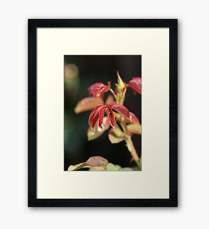 Rose Leaves Framed Print