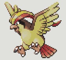 17 - Pidgeot by ColonelNicky