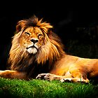 A majestic lion by Elana Bailey