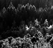 17.1.2014: Forest at Winter by Petri Volanen