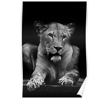 Lions Eyes Poster