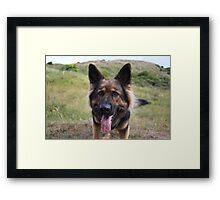Roxy Framed Print