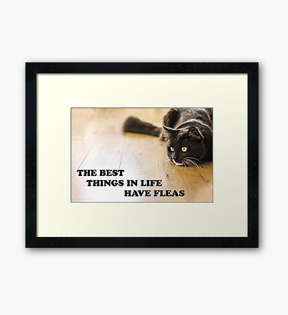 The Best Things In Life Have Fleas Framed Print