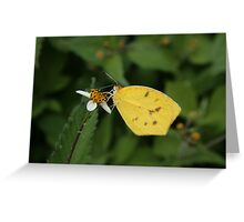 Yellow Butterfly on a White Flower Greeting Card