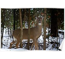 Healthy Whitetail Poster