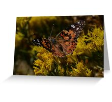 Butterfly on Rabbit brush Greeting Card