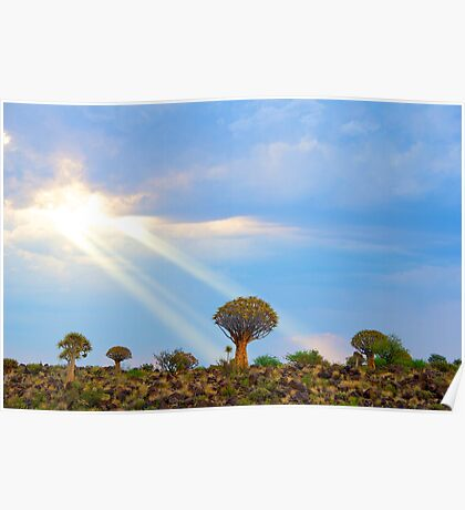 Quiver Tree Forest, Namibia, Africa Poster