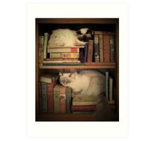 Library Cats Art Print
