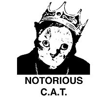 Notorious C.A.T. Photographic Print