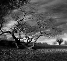 Chatsworth Estate, Derbyshire. by Talbotfox