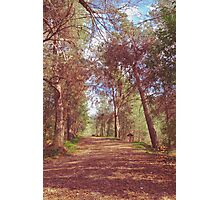 Mystery Path Photographic Print