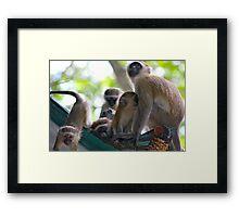 Liwonde National Park, Malawi Framed Print