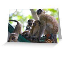Liwonde National Park, Malawi Greeting Card