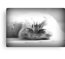 Feline Rest Canvas Print