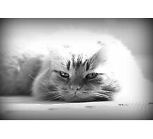 Feline Rest Photographic Print