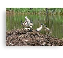 Australian White Ibis ~ The Community Nest Canvas Print
