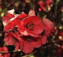Flori Rosii by Emily Rose