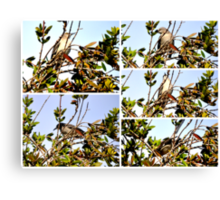 A COLLAGE OF A MOCKINGBIRD HIGH IN THE PYRACANTHA TREE Canvas Print