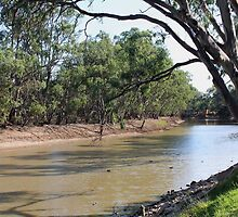 Murray River, Australia by Jennifer Treloar