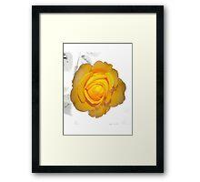 """""""Spot on"""" yellow rose  Framed Print"""
