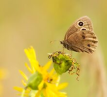 Little Wood-Satyr On Yellow by Thomas Young