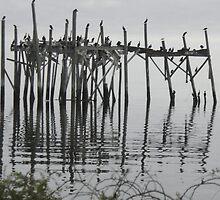 Cedar Key Florida Birds Resting by librapat