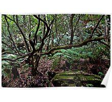 Lawson Rainforest Poster