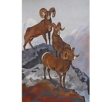 Bighorn Vista Photographic Print