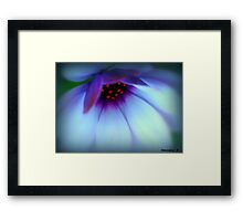 You Light Up My Life............ Framed Print