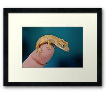BABY GECKO Framed Print