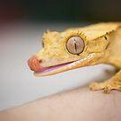 Gecko Lick by CRYROLFE