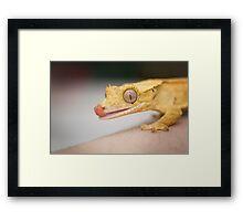 Gecko Lick Framed Print