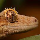 Gecko Eye by CRYROLFE