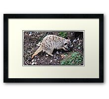 """ Theres a worm in here somewhere"" Framed Print"
