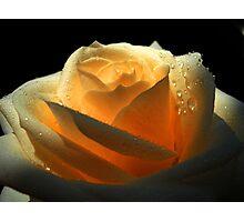 Amber Rose Photographic Print