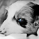 Blue Eye Pup by dedakota