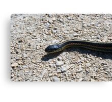 Red Sided Garter Snake Slithering Across a Path Canvas Print
