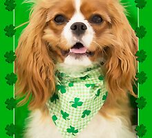 Kiss The Irish Cavalier King Charles Spaniel Puppy  by daphsam