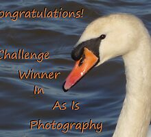 Challenge Winner Banner by Vicki Spindler (VHS Photography)