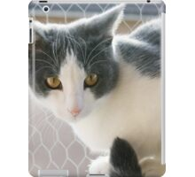 A Max And Mantle Bi Colour Cat iPad Case/Skin