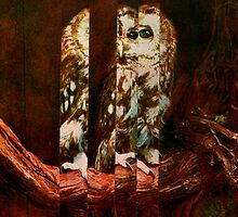 Extended Owl. by - nawroski -