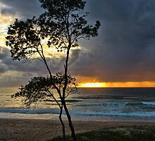 Coffs Harbour Sunrise by Sharon Brown