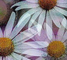 Grunge Daisies by walstraasart