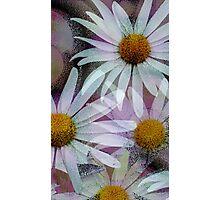 Grunge Daisies Photographic Print