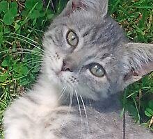 Gray Kitty - Fee-Fee by teresa731