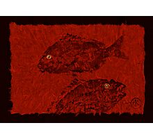 Gyotaku Scup Series 4 Red Unryu Paper Photographic Print
