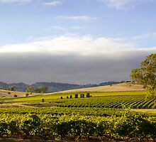 Barossa Valley Landscape by jwwallace
