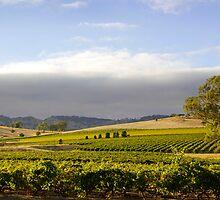 Barossa Valley Landscape by jwwallace